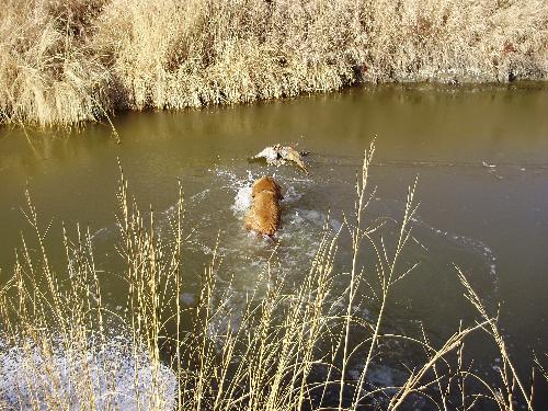 ON THE RETRIEVE